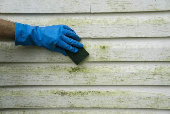 Mold-Clean-Up-Bellevue-WA