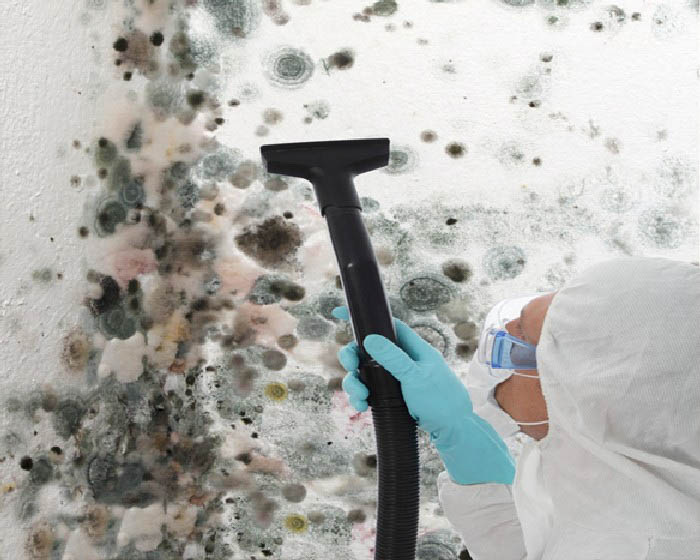 Mold-Clean-Up-Issaquah-WA
