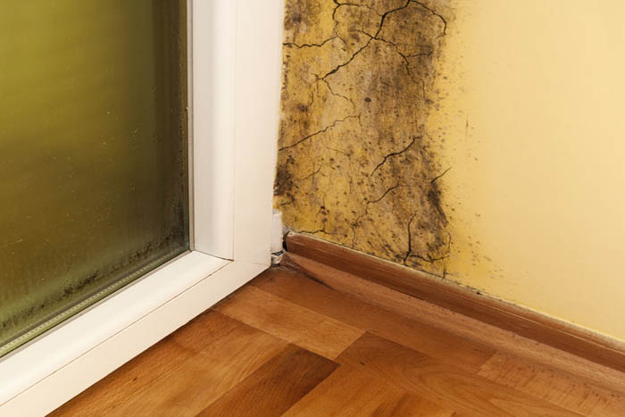 Mold-Clean-Up-North-Bend-WA