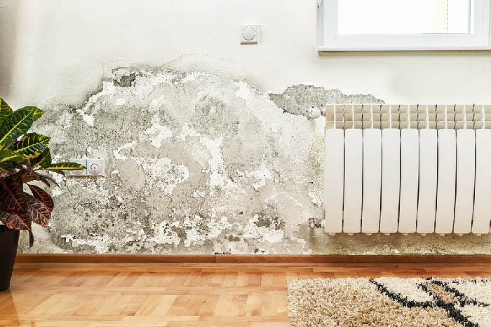 Mold-Removal-Bellevue-WA