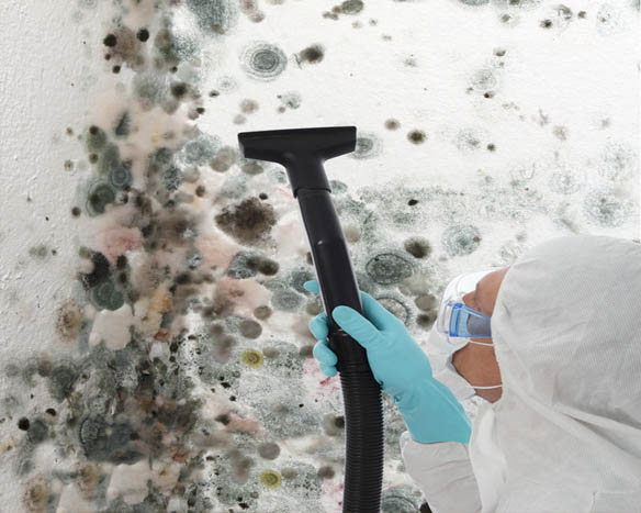 Mold-Clean-Up-New-Castle-WA